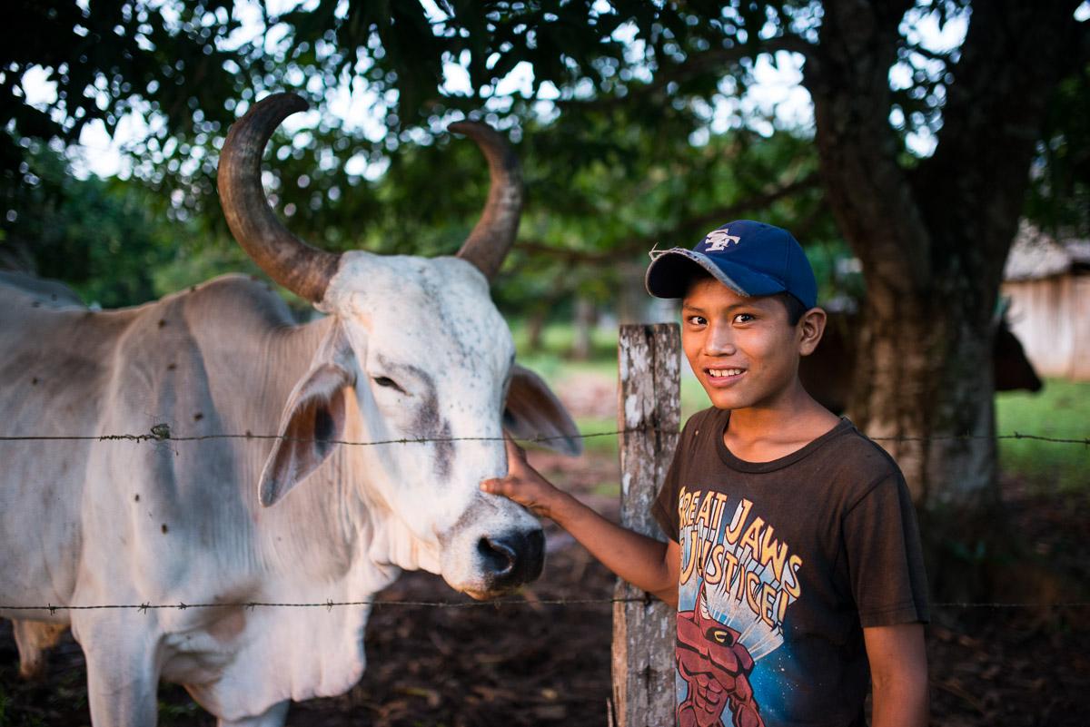 <h5>Puerto Cavinas</h5><p>O olhar orgulhoso do jovem que nos mostra o maior boi das redondezas é indisfarçavel. Sinal de riqueza e de abundância, é uma importante fonte de proteínas na dieta alimentar pouco variada das populações amazónicas. Minutos antes tinhamo-lo conhecido quando brincava com uma vaca, laçando-a com dois amigos, quiçá treinando para quando tiver essa responsabilidade na comunidade.</p>