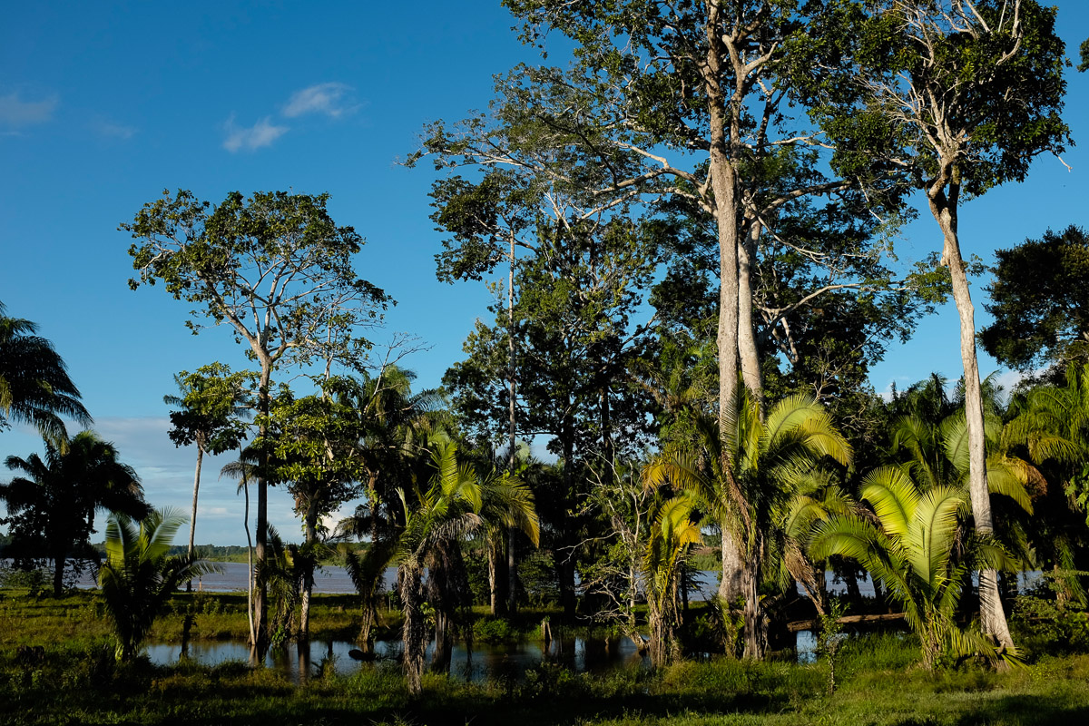 <h5>Trigalito</h5><p>Ao entardecer, as cores intensas da Amazónia revelam-se, não deixando antever o que, daí a minutos, se tornará num inferno pela presença de milhares de mosquitos potencialmente mortíferos, numa zona em que a incidência de malária é muito alta. No pequeno lago, junto a um dos três núcleos familiares, habitam caimões, cujo olhar vermelho, sinistro, se detecta à noite apontando as lanternas na sua direcção.</p>