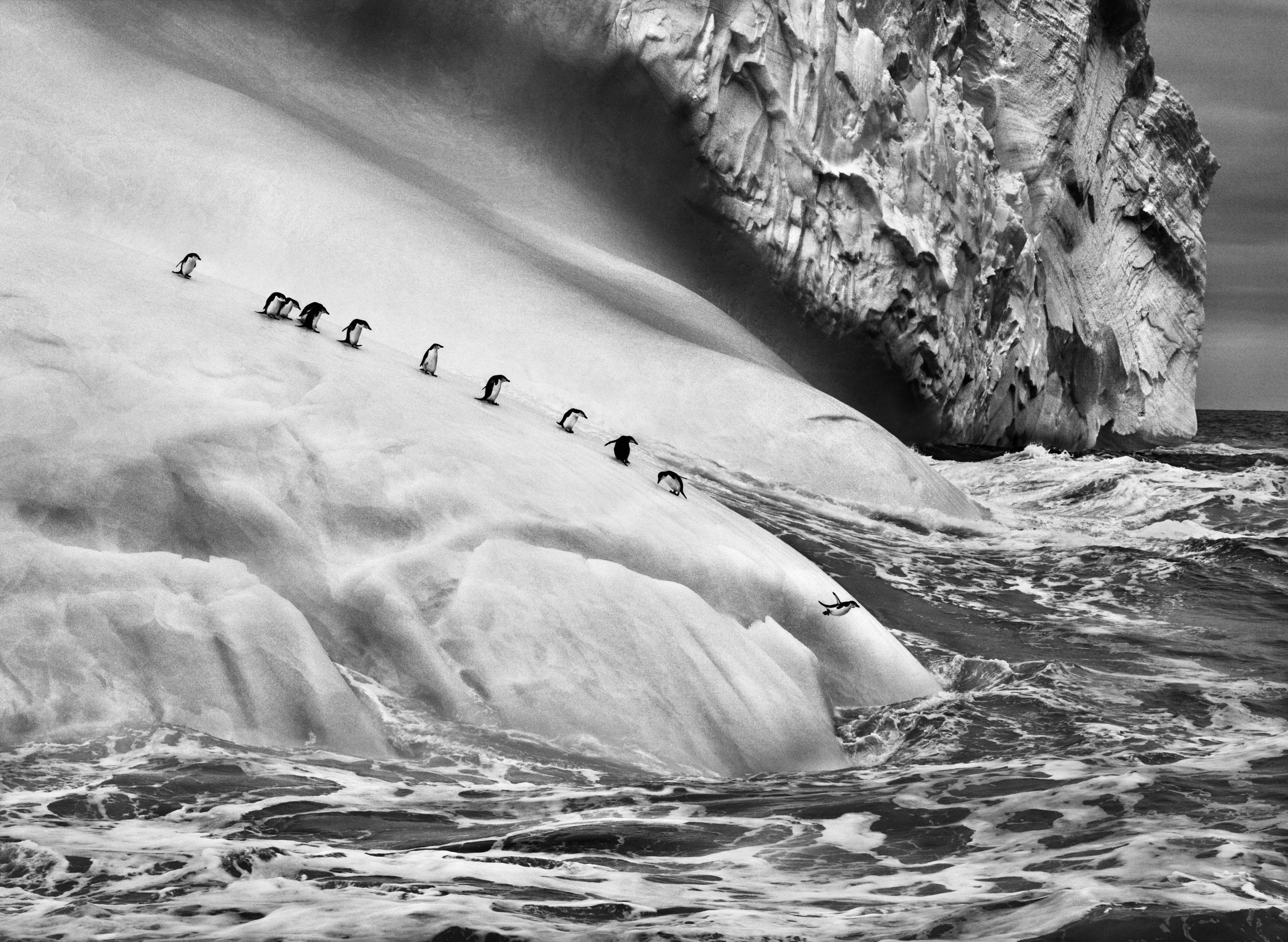 <p>Pinguins-de-barbicha (Pygoscelis antarcticus) sobre um iceberg localizado entre as ilhas Zavadovski e Visokoi. Ilhas Sandwich do Sul. 2009.</p>