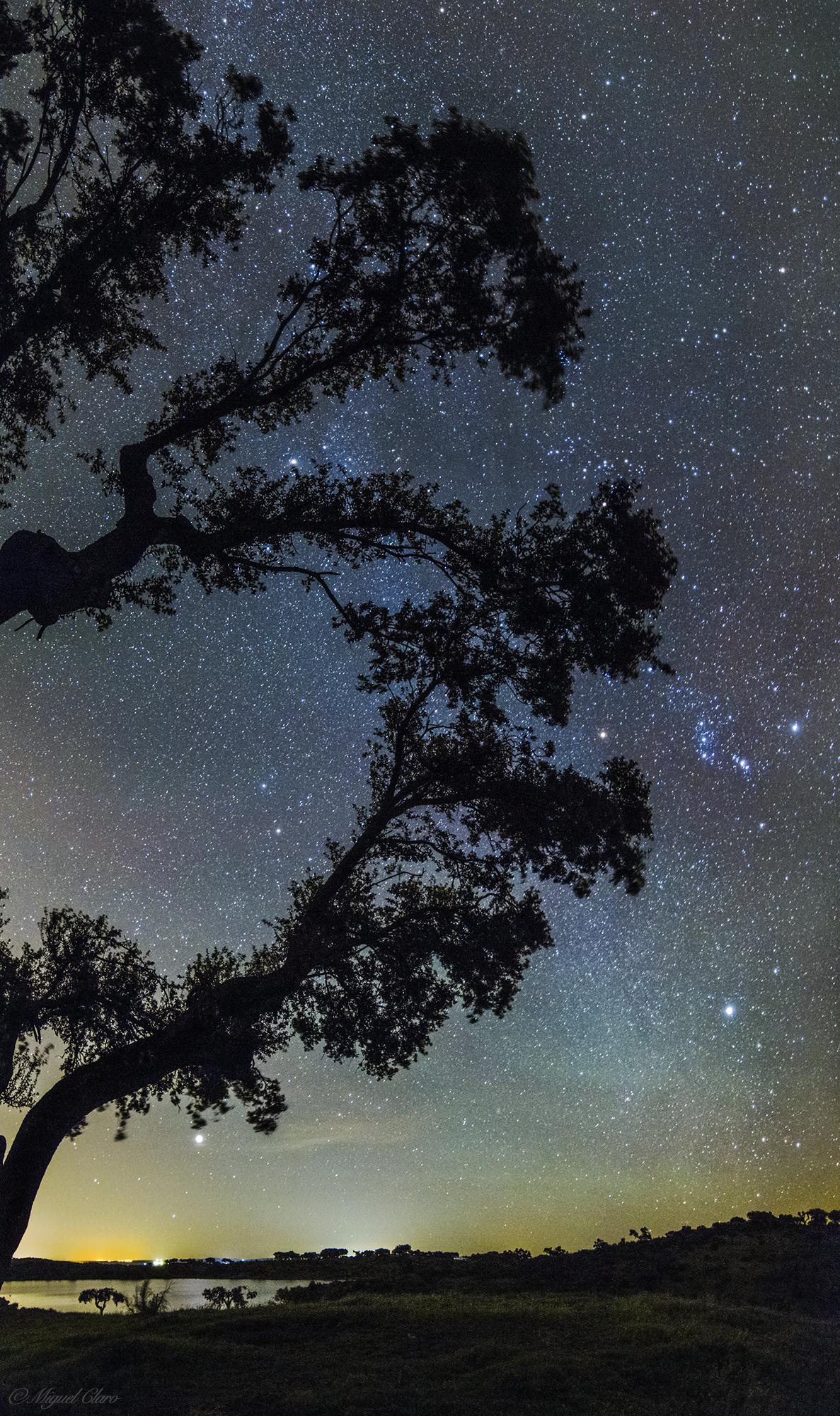 <h5>Cork trees – shadow oasis in Alentejo</h5>