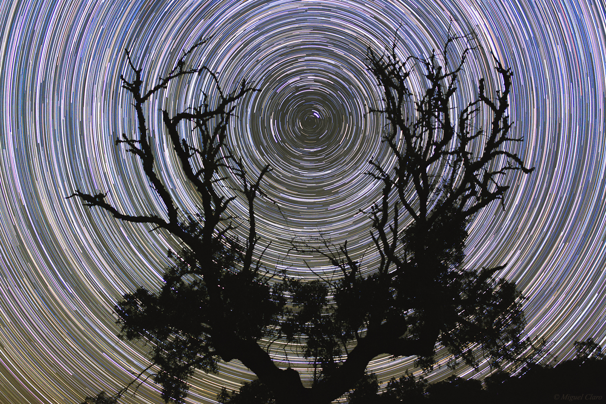 <h5>Polar Startrail in the Arms of a Noudar Tree</h5>