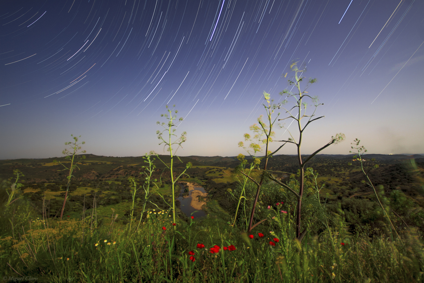 <h5>Startrails in a moonlit Spring field</h5>