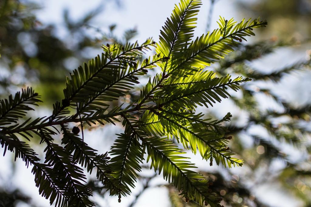 <h5>A luz por entre as  folhas</h5><p>ISO 200 | f/5.6 | 1/640</p>