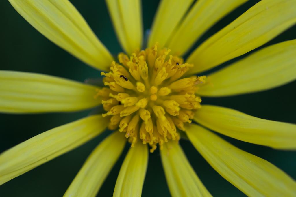 <h5>Pequenos insetos no meio da beleza</h5><p>ISO 200 | f/2.8 | 1/80</p>
