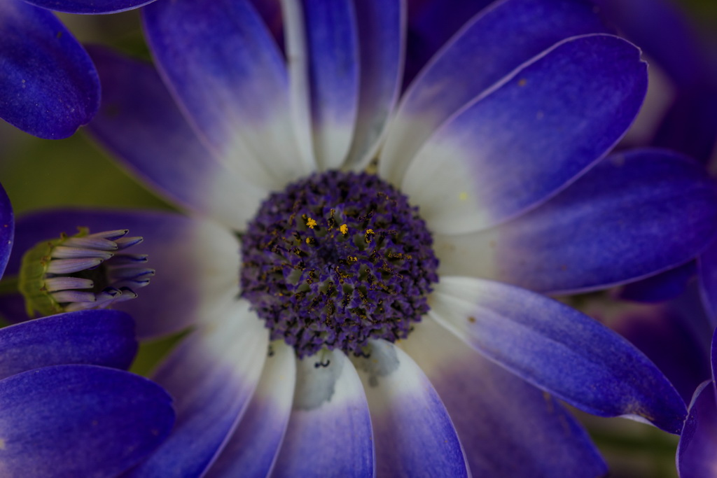 <h5>Azul, tanto azul</h5><p>ISO 200 | f/4.5 | 1/125</p>