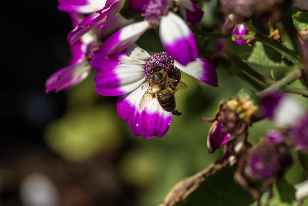 <h5>Papa, abelha, papa</h5><p>ISO 200 | f/5.6 | 1/800</p>