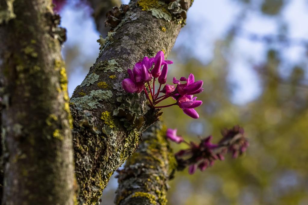 <h5>Na árvore nascem</h5><p>ISO 200 | f/9.0 | 1/200</p>