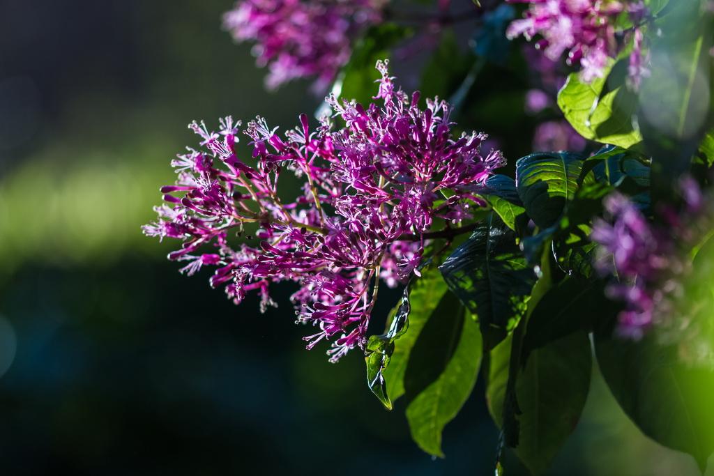 <h5>A luz brilha sobre as flores</h5><p>ISO 100 | f/2.8 | 1/320</p>