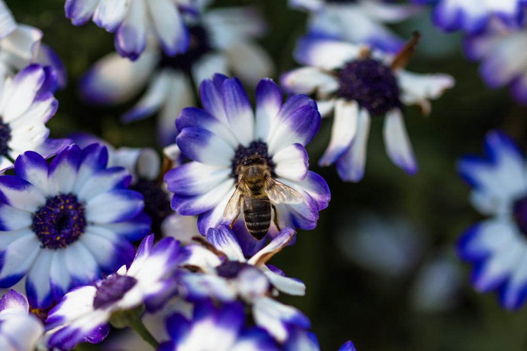 <h5>Tantas opções, apenas uma abelha</h5><p>ISO 200 | f/2.8 | 1/800</p>