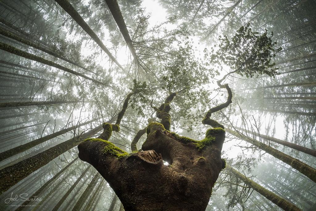 <h5>© Joel Santos - www.joelsantos.net</h5>