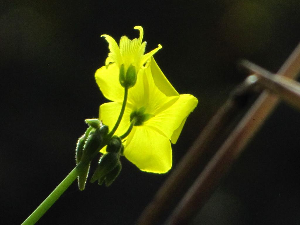 <h5>Com o brilho amarelo</h5>