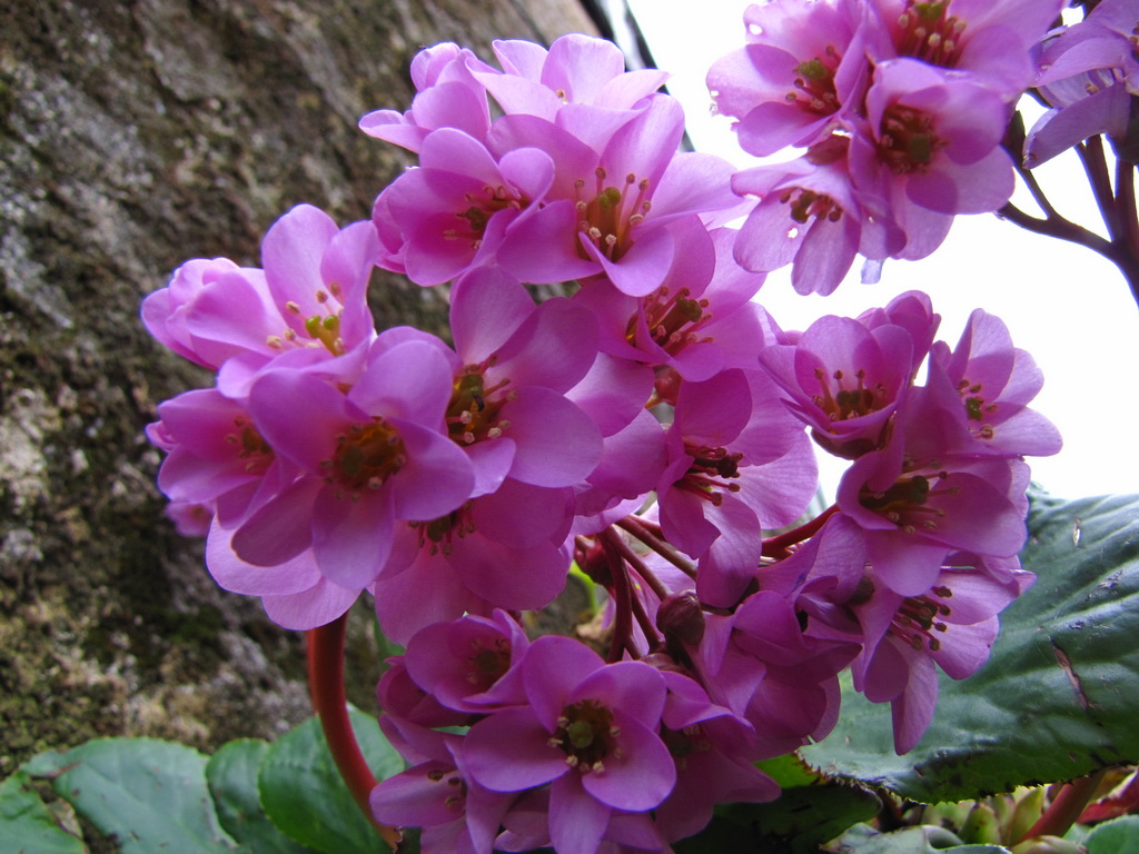 <h5>Em flor</h5>