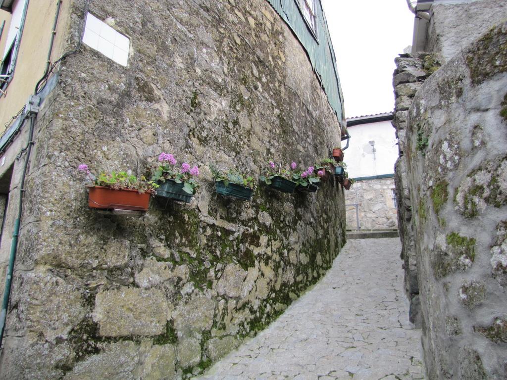 <h5>As flores na pedra</h5>